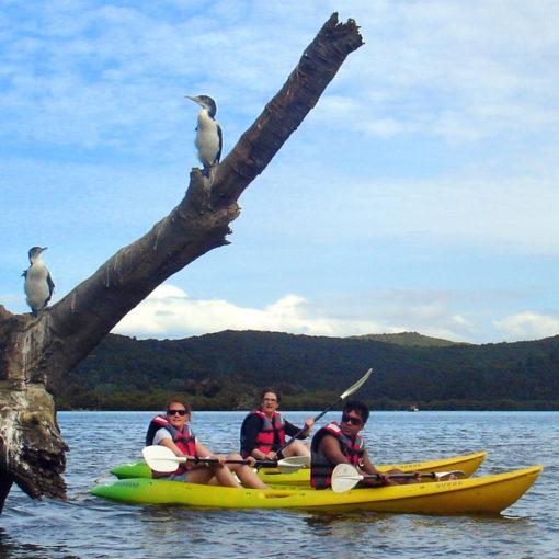 Mission Rua Double Kayak Birds copy